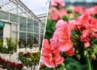 Piante e fiori da terrazzo: ecco come colorare al meglio le nostre case
