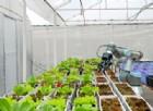 Dalle startup la «trasformazione sostenibile» dell'agroalimentare