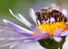 Eczema e dermatite atopica si curano con il veleno delle api