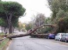 Italia in tilt: nubifragi, alberi caduti e morti. Conte firma lo stato di mobilitazione