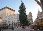 A Certosa un grande albero di Natale