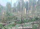 Camminata nel bosco martoriato dei Laghetti di Timau