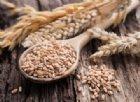 Il grano antico è meglio degli altri? Non per i celiaci. Anzi.