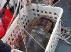 Nuovo ritrovamento di antiche anfore nel mare di Portofino