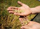 L'agricoltore 4.0? Cerealicolo e titolo di studio in Agraria