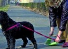 Deiezioni canine su suolo pubblico: lettera del sindaco a tutti i padroni di cani