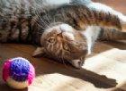 #IoRestoaCasa con il cane e con il gatto: i consigli del Veterinario Comportamentalista
