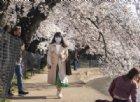 La teoria dell'albero e del bosco: il metodo-Giappone anti-COVID