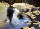 Tubertini, l'avanguardia della pesca sportiva, con Piscor è più conveniente