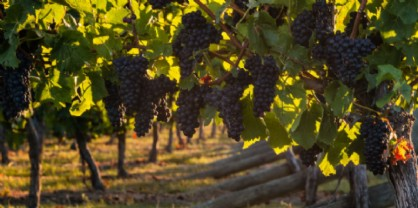 The Global Pinot Noir Masters: medaglia doro al Pinuàr 2015 di Tiare
