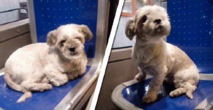 La piccola cagnolina ritrovata sul bus