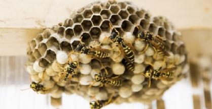 Le vespe, infastidite, hanno attaccato il bambino