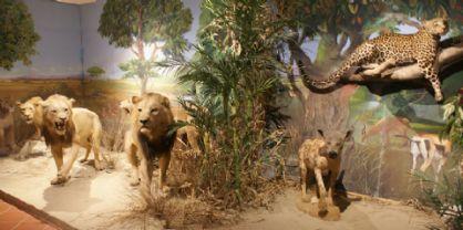 Campus estivo per bambini al Museo di Storia Naturale di Pordenone