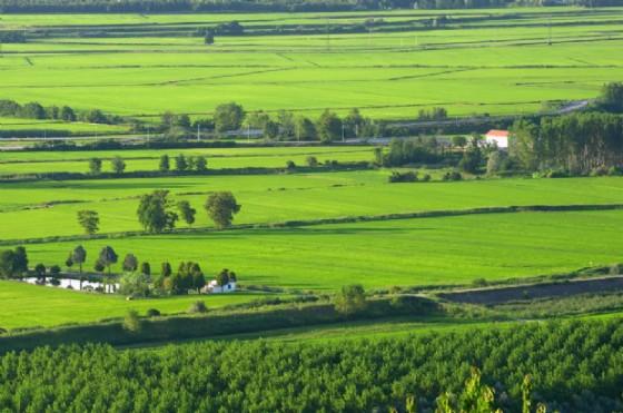 Paesaggio tipico delle campagne vercellesi