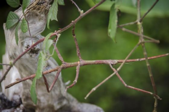 Uno degli insetti che si possono ammirare a Bordano