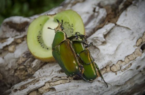 Degli insetti che si possono ammirare a Bordano