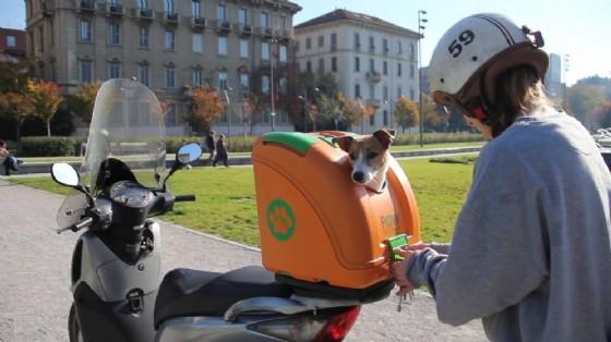 Il trasportino per cani (© Credits photo courtesy of POW -Pet on wheels)