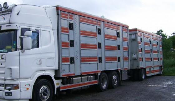 Fermato un autoarticolato che trasportava animali vivi (© Diario di Udine)
