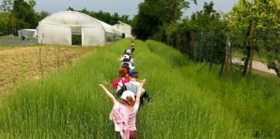 Appuntamento con l'agricoltura sociale a Casarsa
