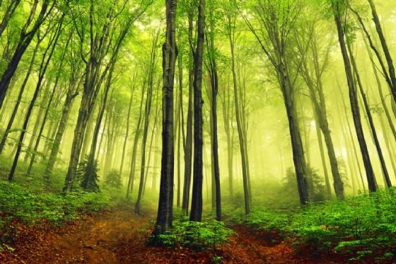 La Terra sta diventando più verde