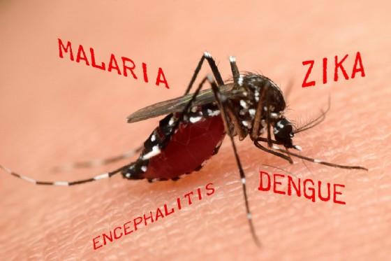 Allarme Zika, oltre la microcefalia causerebbe altri danni neurologici