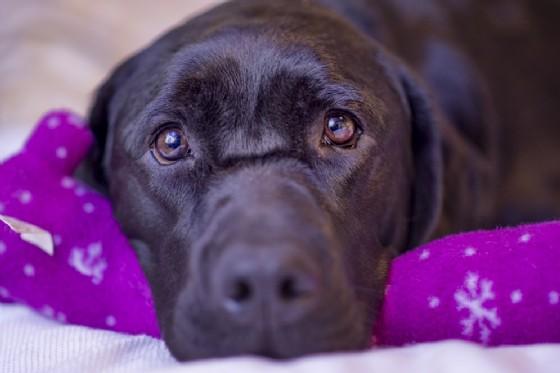 Dormire con il tuo cane fa bene alla salute (© Dean Fikar | Shutterstock.com)
