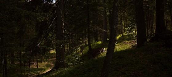 Il bosco della Val Saisera (© Risonanze)