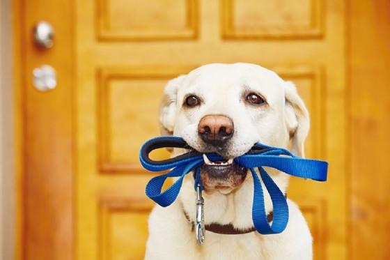 Portare a spasso il cane fa trovare l'amore