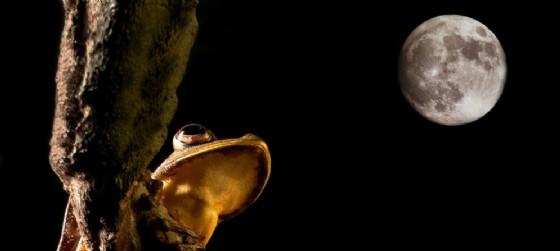 Il lago di notte (© Casa delle farfalle di Bordano)
