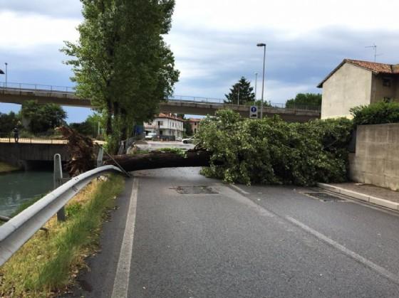 Uno degli alberi caduti tra via Martignacco e via Passons (© Saponaro)