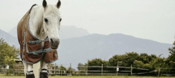 L'appello per l'aquisto di una nuova macchina che nebulizza il fieno (© Rifugio Del Cavallo Onlus)