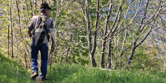 Tragedia in Carnia per un cercatore di funghi (© Adobe Stock)