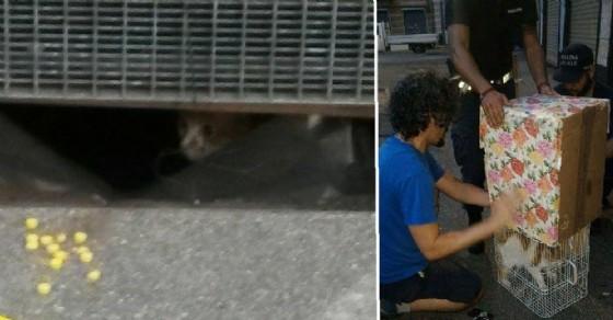 Residenti e polizia municipale si attivano per salvare il gatto (© Federica Fulco)