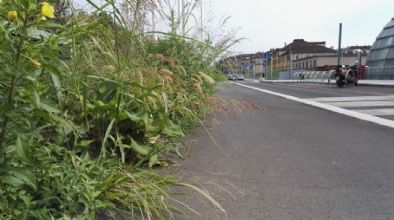 Pista ciclabile invasa dalle piante
