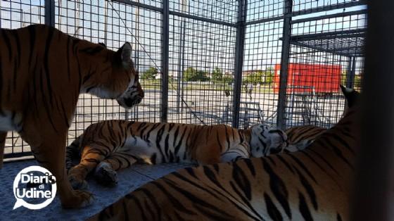 Gli animali del Circo di Vienna