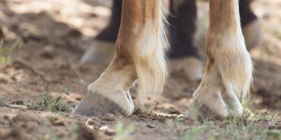 Incidente a cavallo nel Manzanese (© Adobe Stock)