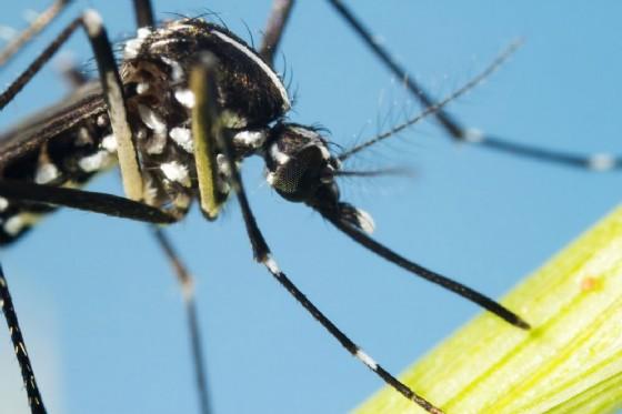 Sospetto caso di febbre dengue, profilassi a Firenze e Scandicci