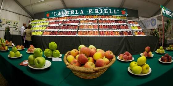 Premiate le migliori mele del Fvg (© Pantianicco)