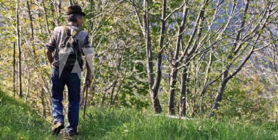 Un cercatore di funghi (© Diario di Udine)