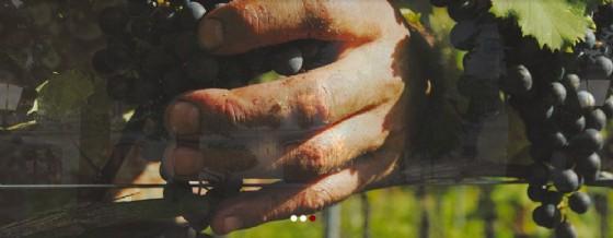 Vini per vegani a Remanzacco (© Diario di Udine)