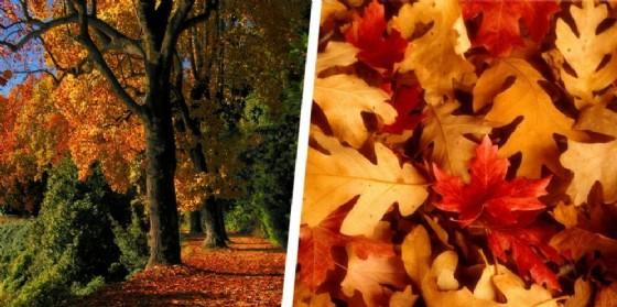 La Burcina in autunno