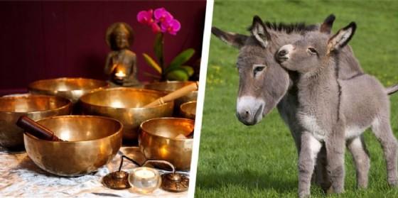 bagno di gong e campane tibetane a Salussola e grooming day al Rifugio degli Asinelli