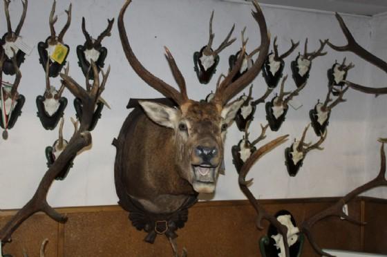 Altra immagine degli esemplari cacciati
