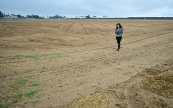 Kern County Farm Bureau executive director Beatris Sanders walks on land where alfafa once grew but is now fallow due to the drought on the outskirts of Bakersfield