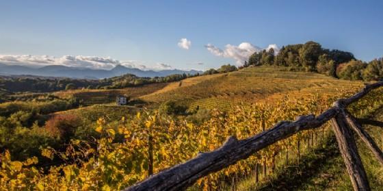 Buona annata per il vino del Consorzio Fvg (© Consorzio)
