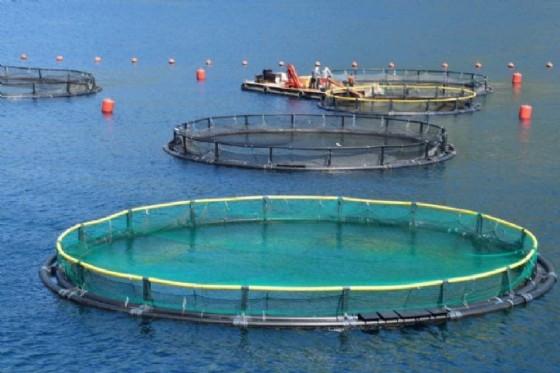 La sinergia che la Regione ha attivato nel settore ittico con le cooperative e le associazioni del comparto è significativa e strategica, rappresenta un'esperienza pilota in Italia (© Adobe Stock)