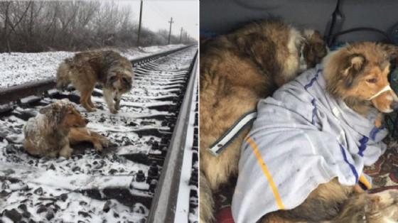 I due cani protagonisti della toccante vicenda (© Facebook - Denis Malafeev)