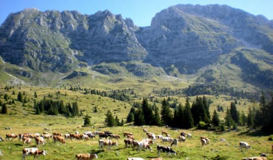 L'altopiano del Montasio durante la stagione estiva (© Diario di Udine)