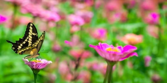 'Bosco delle farfalle' apre in piazza XX Settembre (© AdobeStock | Phils Photography)