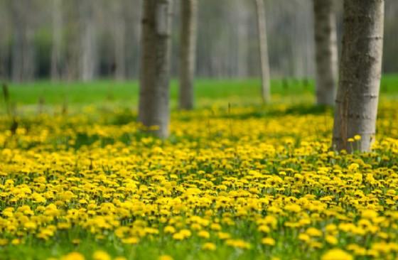 Arpa, pollini come indicatori di biodiversità e di cambiamenti climatici